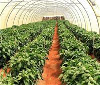 الحفاظ على الأراضي الزراعية..طريق مصر للتنمية