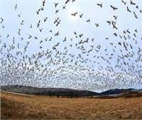 أمين عام خبراء البيئة العرب يكشف أسباب هجرة الطيور