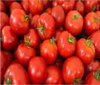 الزراعة : طرح العروة النيلى من محصول الطماطم أول أكتوبر المقبل