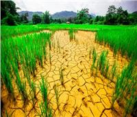 القطاع الزراعي فى مصر يتحدى التغيرات المناخية