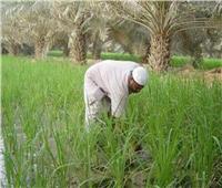 في عيده السنوي الـ 69.. الدولة تقدم كل سبل الدعم لتطوير حياة الفلاح المصرى