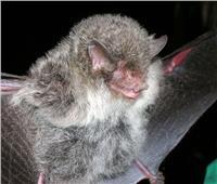أندر 4 حيوانات تم اكتشافها في العالم