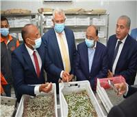 وزير التنمية المحلية يتفقد مشروع واحة الحرير بالوادى الجديد
