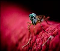 طريقة جديدة للتخلص من البعوض ويوقف انتشار الملاريا