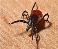 دراسة تحذر من جائحة جديدة تنتقل الى البشر عبر لدغة الحشرات